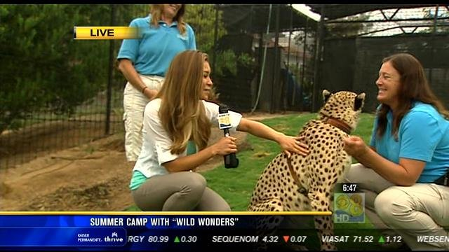 Summer camp with 'Wild Wonders'