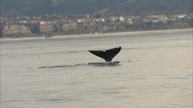 Whales give sightseers thrill of lifetime