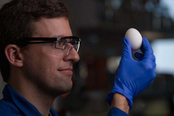 No Yolk! Scientists Unboil an Egg Without Defying Physics