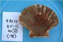 In this undated photo provided by Mark Robinson, environmental archeologist at Oxford University Museum of Natural History, a scallop shell with makeup found in a sewer of Herculaneum. Archaeologists picking through latrines, sewers, cesspits and trash dumps at Pompeii and Herculaneum have flushed out tantalizing clues to what appears to be a varied diet in those ancient Roman cities destroyed in 79 A.D. by the eruption of Vesuvius. Much of what the inhabitants of those doomed towns didn't digest or left on their plates became traces lining toilet pipes, remnants in centuries-long buildup in cesspits, or throwaway in dumps. At a three-day conference ending Friday in Rome, archaeologists discussed their discoveries, including gnawed-on fish bones, goose eggshells from meals of the elite and carbonized nibbles baked perhaps as offerings for deities. (AP Photo/Mark Robinson/Oxford University Museum of Natural History)