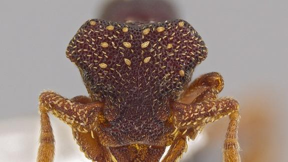 33 Bizarre New Ant Species Discovered