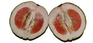 10 Buah-buahan Bervitamin C Lebih Banyak Daripada Jeruk8