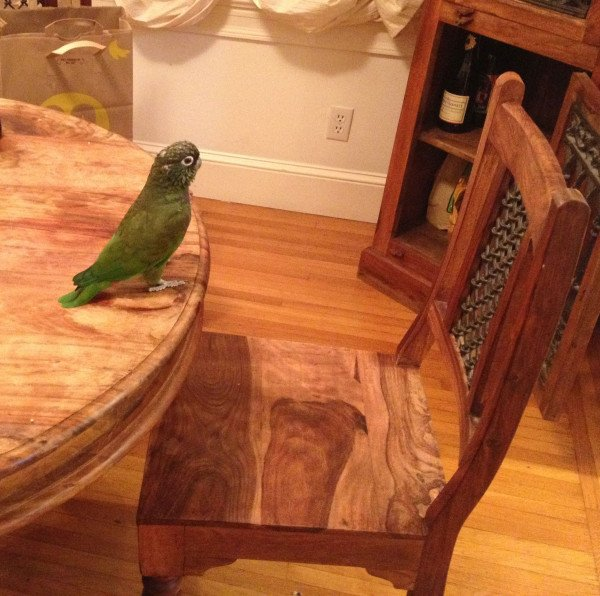 Eastwooding bird