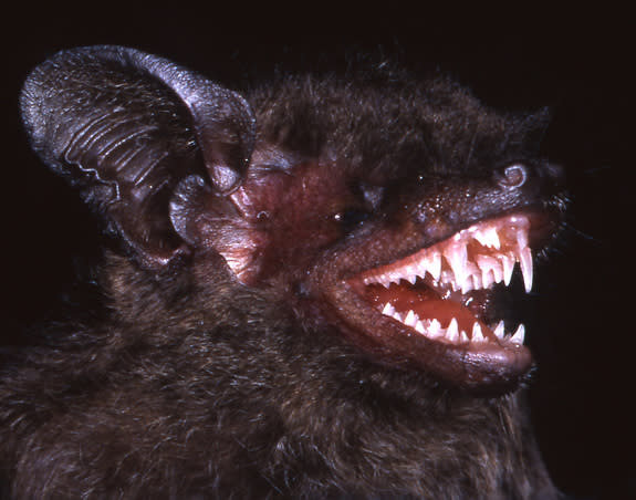 'Dementor' Wasps and Long-Fanged Bats! Trove of New Species Found
