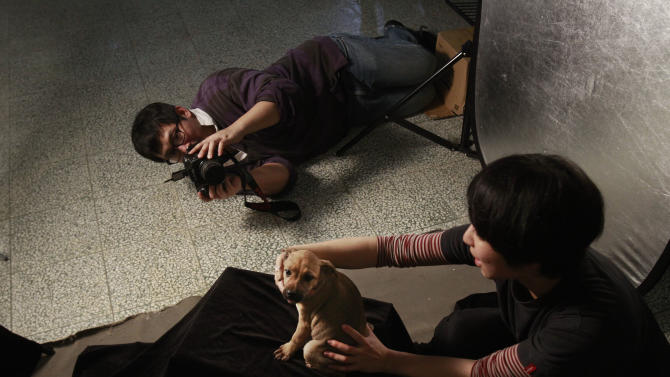 In this photo taken on Monday, April 9, 2012, iIn a makeshift studio, Taiwanese photographer Tou Chih-kang tries to make a portrait of a puppy in the final moments of its life before being put down by lethal injection at a shelter in Taoyuan, northern Taiwan.  Tou has been visiting dog shelters for two years now, making human-like portraits that give a sense of dignity and esteem to some 400 canines, in hopes of educating the public on the proper care of pets. This year Taiwanese authorities will kill an estimated 80,000 stray dogs at 38 pounds scattered throughout the island. (AP Photo/Wally Santana)