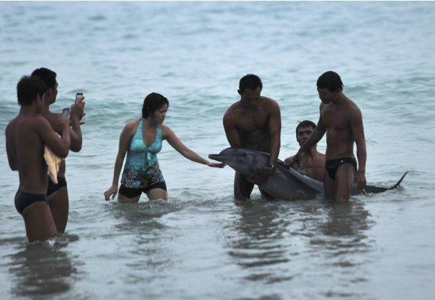 Tourists take pictures of a stranded dolphin at a beach in Sanya