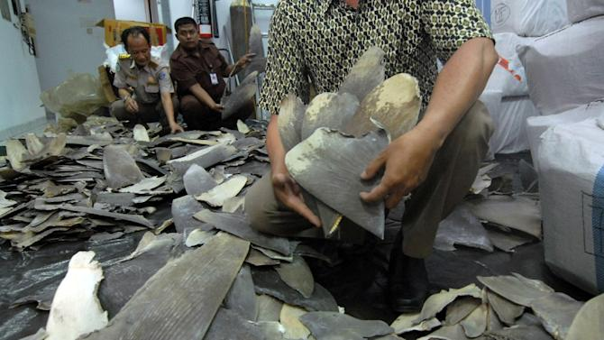 Indonesian customs and quarantine officers inspect some 3,000 shark fins seized at the Soekarno-Hatta International Airport near Jakarta and destined for Hong Kong on October 5, 2015