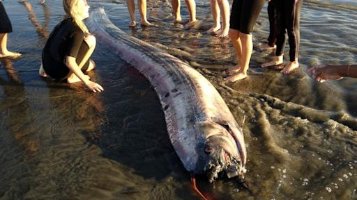 Second Sea Serpent Washes up in California