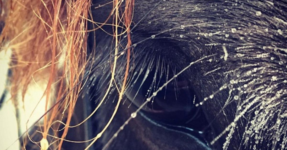 The Magic Of A Horse's Eyes In 18 Photos