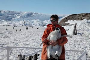 Melting Sea Ice Could Decimate Emperor Penguins
