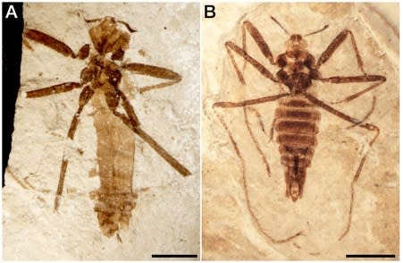 Sneaky Ancient Flea Dined on Flying Reptiles
