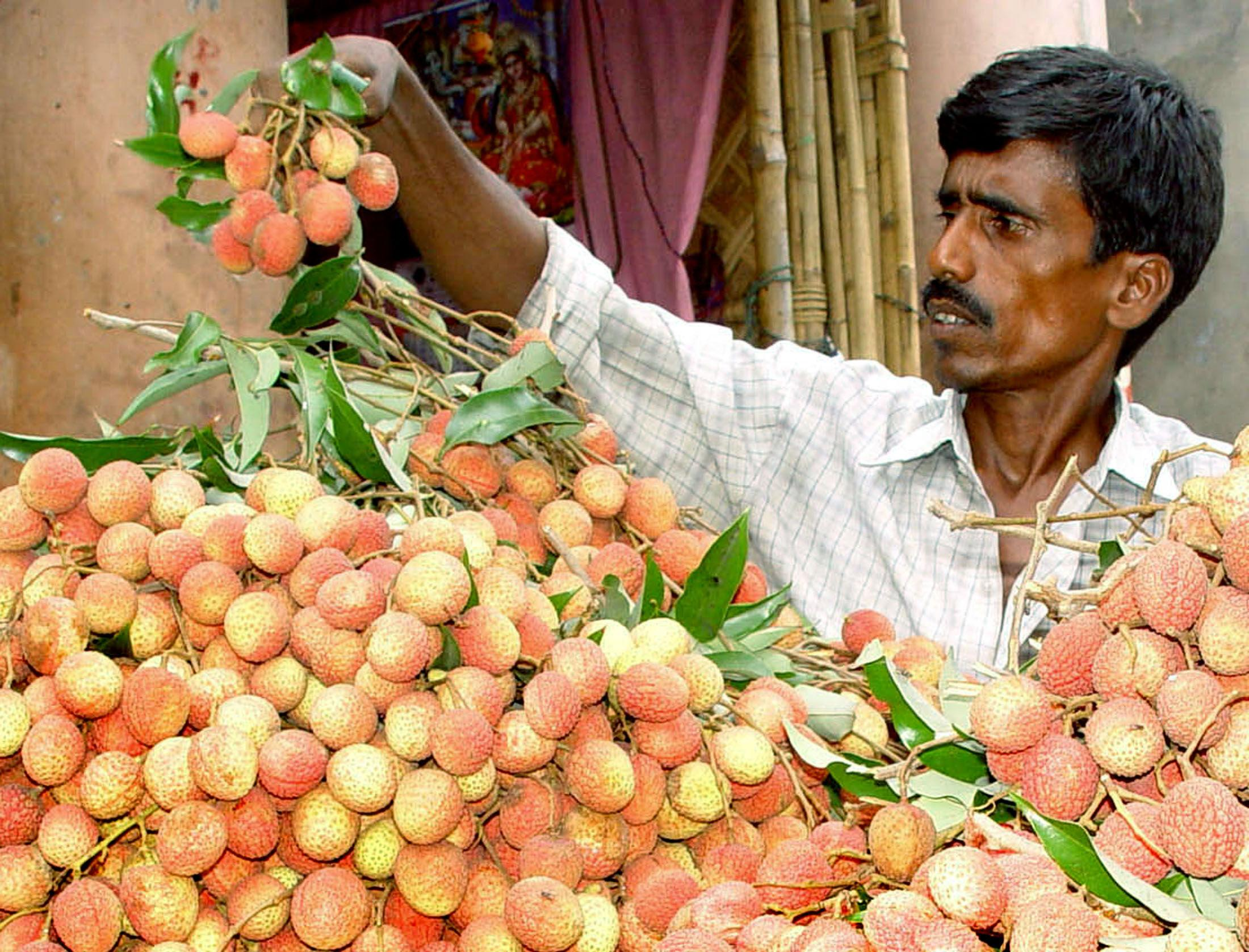 Litchi fruit suspected in mystery illness in India