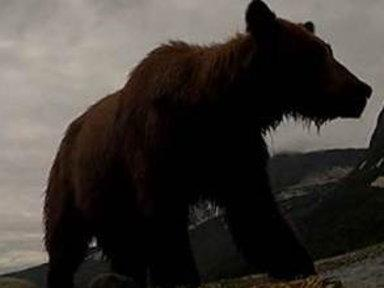 Ever Wonder What It's Like to Get Eaten by a Bear?