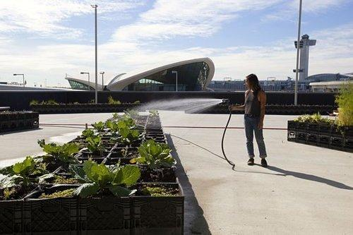 JFK Airport Sprouts an Urban Farm