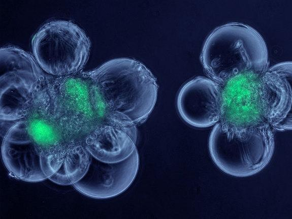 Glowing Green Orbs & Pink Butterflies Revealed in Winning Bio-Art Images