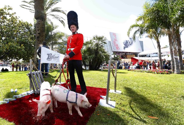 A man dressed as a Britain's Guard of Honour and keeping pigs on a leash perform outside the Festival Palace while promoting the movie Redirected during the 66th Cannes Film Festival