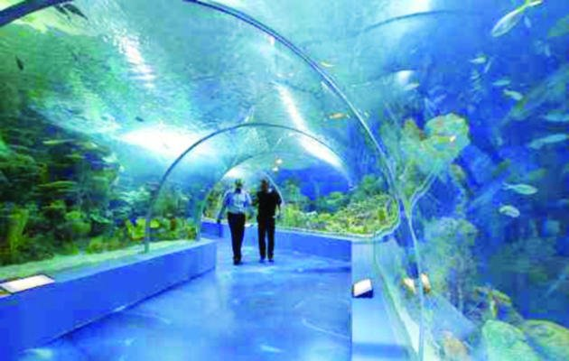 Fakieh Aquarium is only one part of a bigger dream