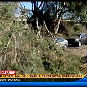 Major storm, major cleanup, trees down everywhere