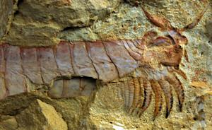 500-Million-Year-Old Sea Creature With Limbs Under Its Head Unearthed