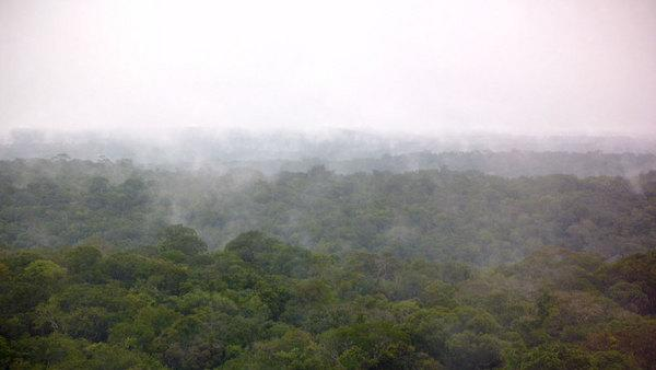 Less Forest, Less Rain: Deforestation Reduces Tropical Rainfall