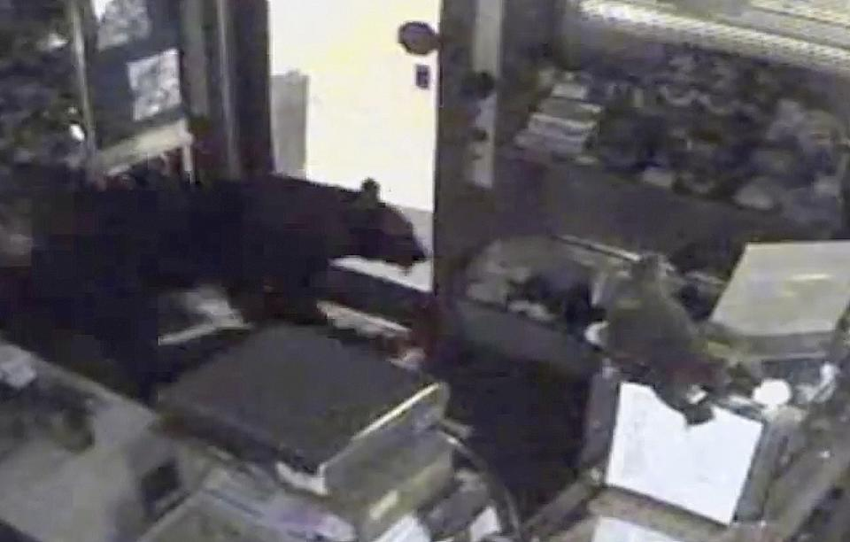 Careful bear raids Colorado candy shop