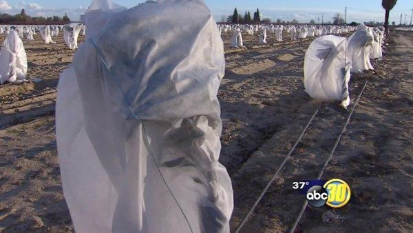 Freezing temperatures come with $11 million price tag