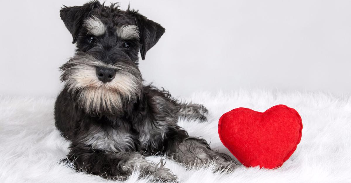 Watch Cute Puppies on this Live Webcam!