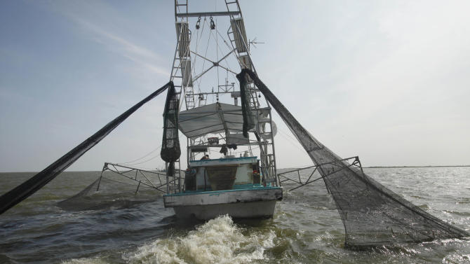 FILE - In an Aug. 16, 2010 file photo, shrimpers haul in their catch in Bastian Bay, near Empire, La., on the first day of shrimping season. Efforts to protect endangered sea turtles in the Gulf of Mexico have prompted strenuous complaints from the dwindling fleet of shrimpers blamed for drowning them in their nets, who say their own livelihoods are threatened. By next March the federal government wants about 2,435 shrimp boats, most run by mom-and-pop operations, to install turtle-saving gear in their nets to protect the turtles, whose survival has gained renewed concern after BP's catastrophic 2010 Gulf oil spill.  (AP Photo/Gerald Herbert, file)
