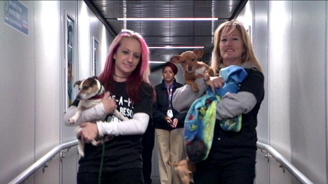 Superstorm Sandy: Pets Displaced by Storm Get Help in California