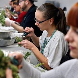 Washington State Pot Stores Open Doors on Day One of New Marijuana Law
