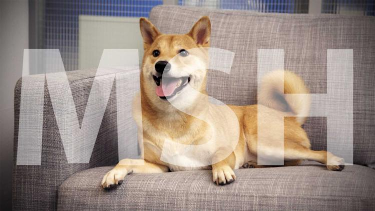 Exclusive First Topless Photos of Tumblr's 'Menswear Dog'