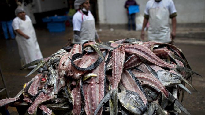 FILE - In this Nov. 28, 2012 file photo, the carcasses of fish that were gutted and filleted for customers, fill a trash bin to the brim at the Villa Maria del Triunfo market, one of the largest fish markets in Lima, Peru. Not only has overfishing of the Peruvian anchovy, or anchoveta, battered the industry that makes Peru far and away the world's No. 1 fish-meal exporter, it has also raised alarm about food security in a nation that had long been accustomed to cheap, abundant seafood. Peru's government ordered radical restrictions on what the country's 1,200-boat commercial fleet could catch after anchoveta stocks plummeted. But compliance with strict government quotas has been problematic. (AP Photo/Rodrigo Abd, File)