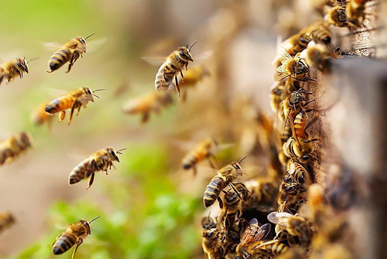 Bee-Killing Pesticides May Get New Restrictions From the EPA