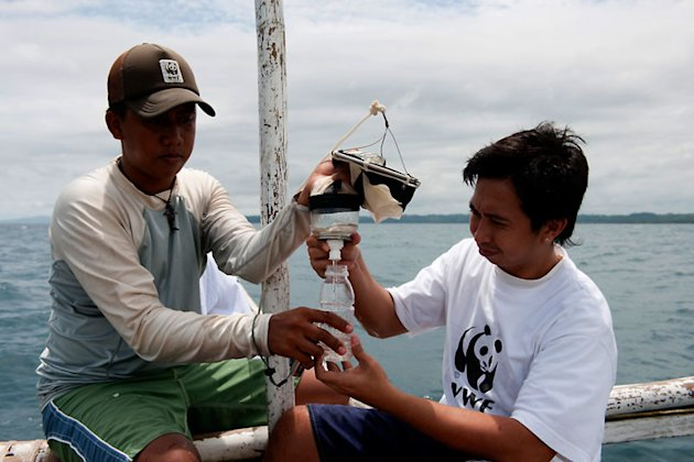 WWF Philippines Donsol Research Coordinator Elson Aca writing down details of a Whale shark satellite tag into his slate. This is a SPLASH Tag deployed in 2007, it records position only for mapping wh