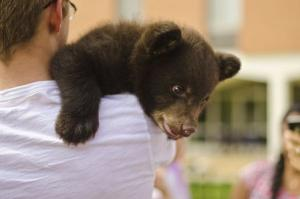 Handout picture of a two-month-old bear cub named Boo Boo held by a student at Washington University in St. Louis