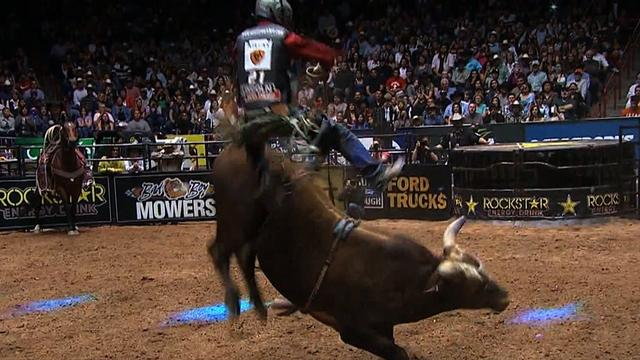 """Bushwacker"" bucks competitive bull riders at record rates"