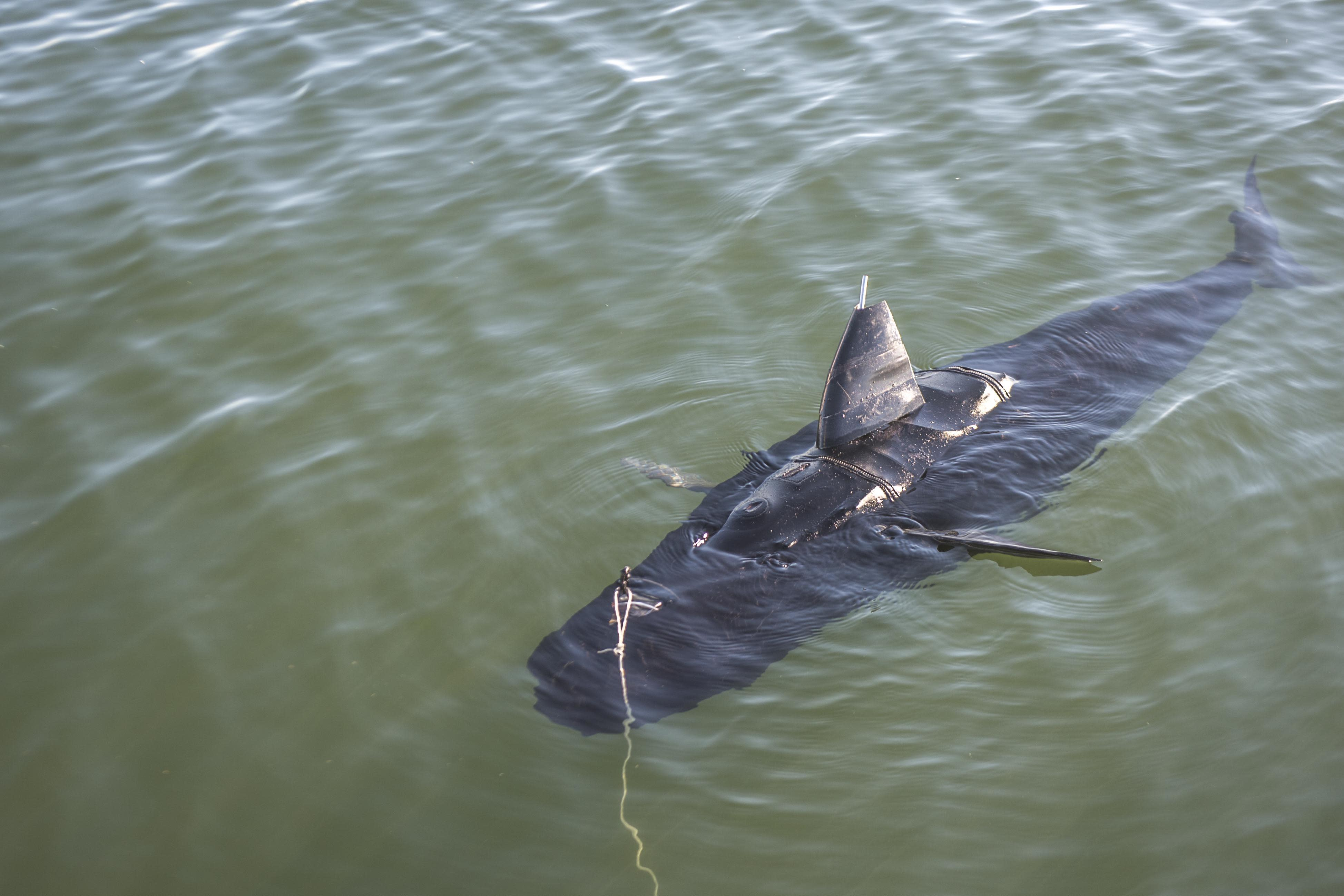 US Navy turns to 'Jaws' for drone inspiration
