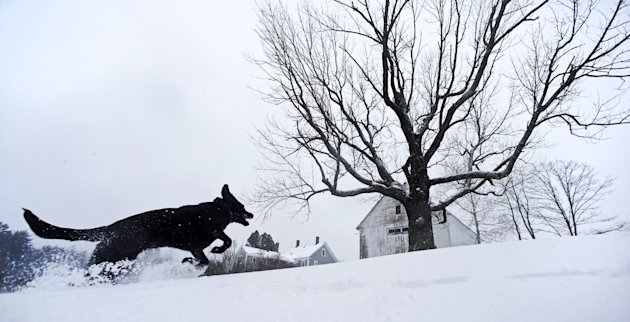 Luna, a black Lab mix, frolics in fresh snow in East Derry, New Hampshire, Thursday, Dec. 27, 2012. The southern N.H. area received about eight inches of snow from the winter storm. (AP Photo/Charles 