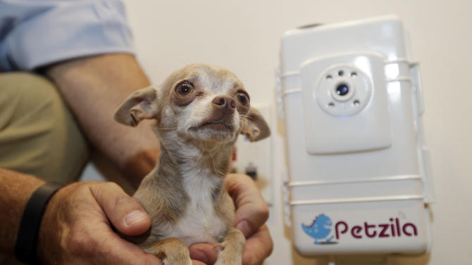 Bella, Petzila's mascot, is posed for a photo next to the company's product, a device that allows pet owner to communicate with their pets remotely, on Wednesday, Aug. 28, 2013, in San Jose, Calif. Silicon Valley's high tech firms are fighting what they consider a deeply personal federal cut this summer that shelves a planned patent office in this innovation-fueled region. While most of the country is feeling some pinch from the automatic budget cuts known as sequestration, tech leaders say this one is unique and unfair, because the Commerce Department's satellite patent offices aren't funded by taxpayers, but instead are paid for with the $2.8 billion in annual patent fees. (AP Photo/Marcio Jose Sanchez)