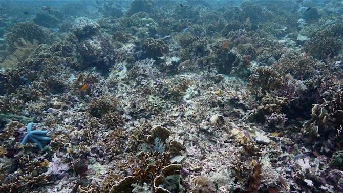 This photo taken in March 20, 2012 shows coral reefs damaged by fishermen in the waters of Tatawa Besar, Komodo islands, Indonesia. Coral gardens off the Komodo Islands were just a few months ago teeming with clouds of brightly colored reef fish, octopi with fluorescent banded eyes and black-and-blue striped sea snakes. Today, after being pounded by increasingly brazen blast fisherman, several diving sites within the U.N. World Heritage Site have been transformed into desolate grey moonscapes. (AP Photo/Michael W. Ishak)