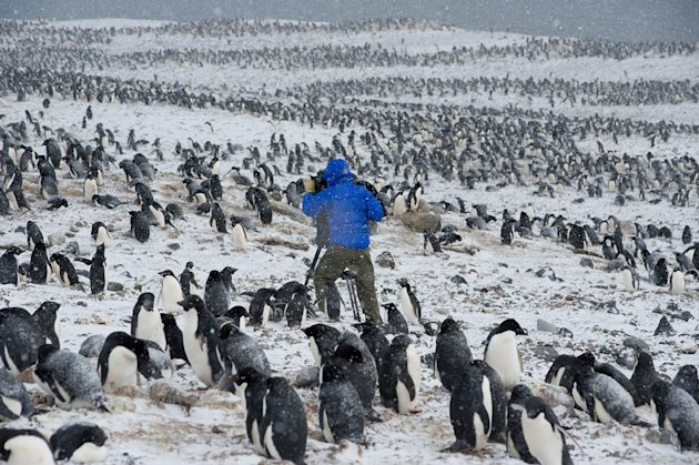 Cameraman Mark Smith filming Adelie penguins in early Spring. Frequent snow storms with winds of up to 150mph kept both team members on their toes throughout their 4 months working alone at Cape Crozi