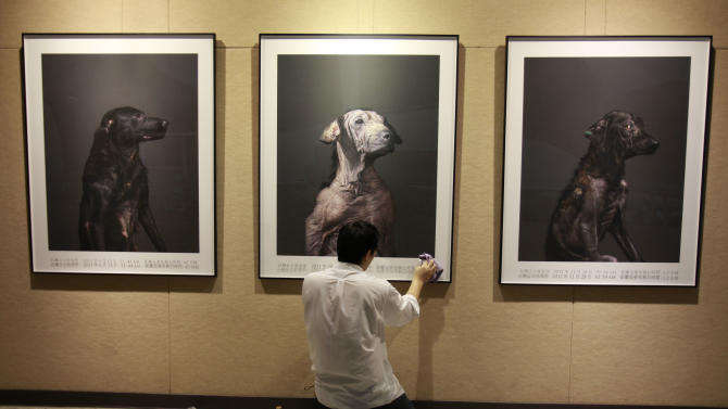 In this photo taken on Wednesday, April 25, 2012, Taiwanese photographer Tou Chih-kang hangs his portraits of the final moments in the lives of shelter dogs for a public exhibition in Taoyuan, northern Taiwan. Tou has been visiting dog shelters for two years now, making human-like portraits that give a sense of dignity and esteem to some 400 canines, in hopes of educating the public on the proper care of pets. This year Taiwanese authorities will kill an estimated 80,000 stray dogs at 38 pounds scattered throughout the island. (AP Photo/Wally Santana)