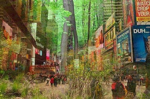 The Great Outdoors: Proposal to Bring Pop-Up Forest to Times Square Gets Funded