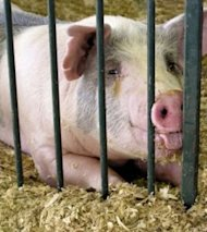Swine flu appears in three states.