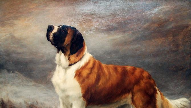This undated publicity image provided courtesy of American Kennel Club shows a St. Bernard. In the 1890s, the St. Bernard was accepted by the American Kennel Club and became No. 1. To this day, the dog is the only giant breed to reach the top spot and the only No. 1 never to appear in the top-10 again. (AP Photo/Courtesy American Kennel Club)