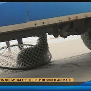 Sea lion show halted to help rescued animals