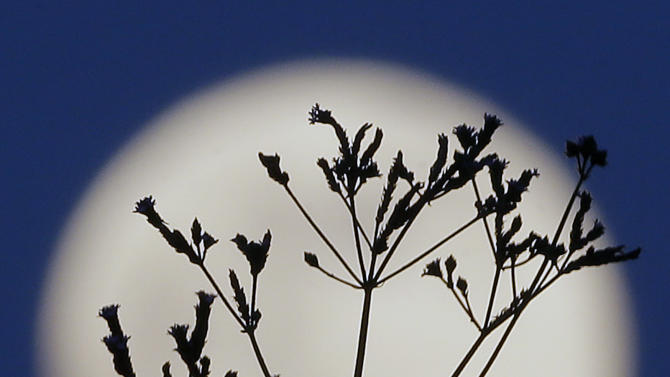 """A """"supermoon"""" rises behind roadside plants growing in Prattville, Ala., Saturday, June 22, 2013. The biggest and brightest full moon of the year graces the sky early Sunday as our celestial neighbor swings closer to Earth than usual. While the moon will appear 14 percent larger than normal, sky watchers won't be able to notice the difference with the naked eye. Still, astronomers say it's worth looking up and appreciating the cosmos. (AP Photo/Dave Martin)"""