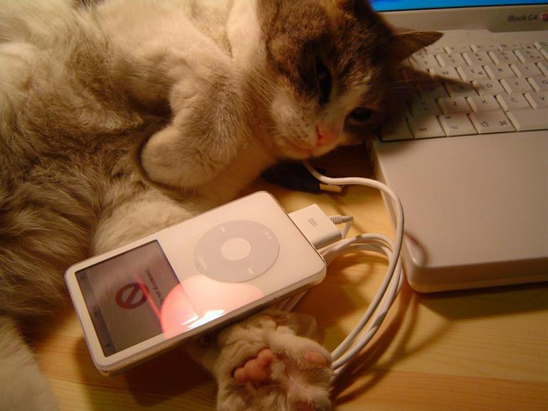 Rhapsody in Mew: The music scientifically composed for kitties