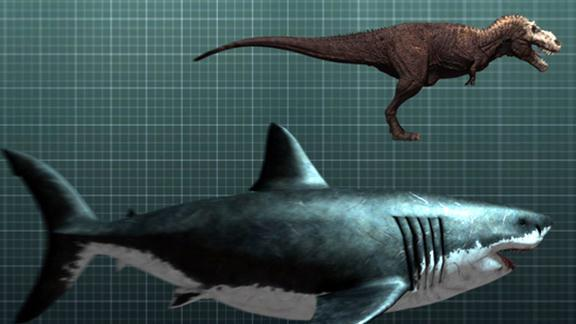 The Nightmarish Megalodon