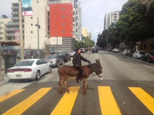Sidewalk Ballet: Hey, There's a Donkey Roaming Around Hayes Valley